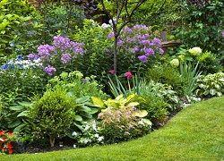багаторічники, квітучі все літо