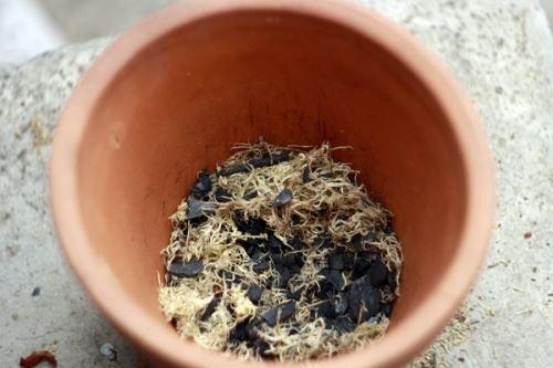 Суміш сфагнуму і деревного вугілля