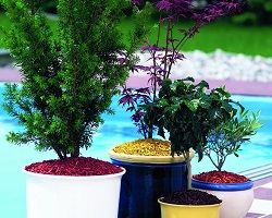 Мульчування грунту в квітковому горщику
