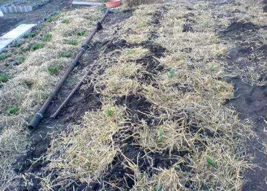 мульчування травою