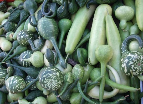 На порозі осені: хоровод овочів з красивими плодами