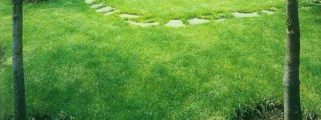 Наш дикий газон