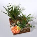 Трохи про складання композицій з кімнатних рослин