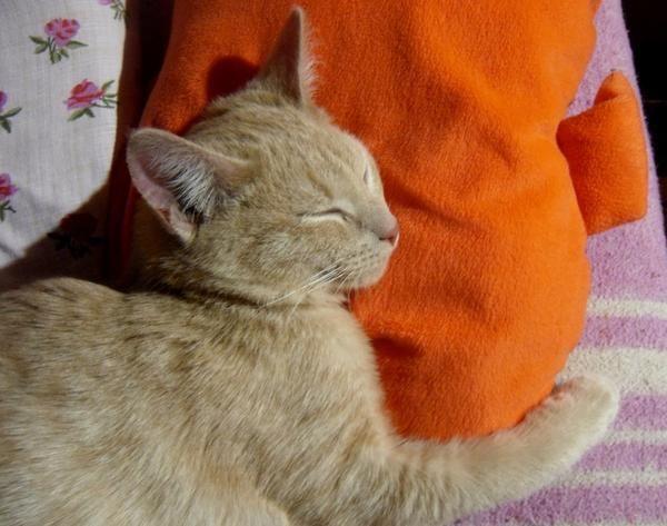 Персик любить спати в обнімку з подушкою.