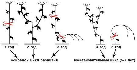 Схема посадки квітника