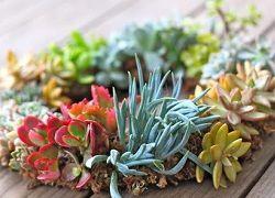 Невибагливі рослини для домашнього та офісного фітодизайну