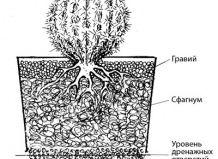 Нестандартні субстрати для вирощування сукулентів