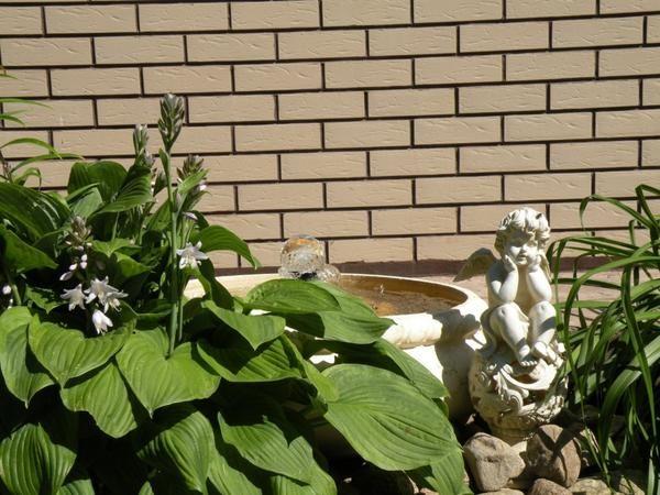 Нове життя старого саду