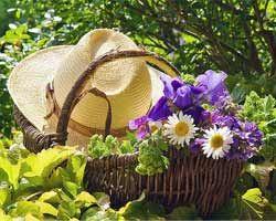 Загальні назви садових квітів