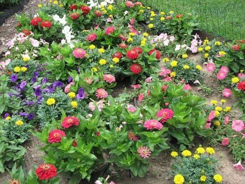 Підбір квіткових композицій з однорічників