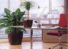 Офісні рослини, що стимулюють розумову діяльність