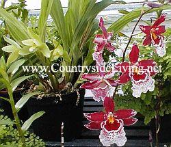 Орхідеї для початківців