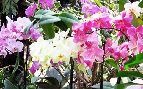Орхідеї: розмноження живцями і догляд за молоденькими рослинами