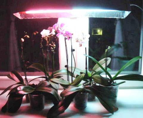 Фітолампи для освітлення орхідей взимку