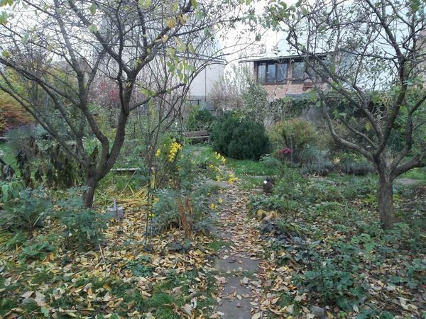 Осінь: подзимний вологозарядні полив
