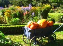Осіннє зачарування сільського саду