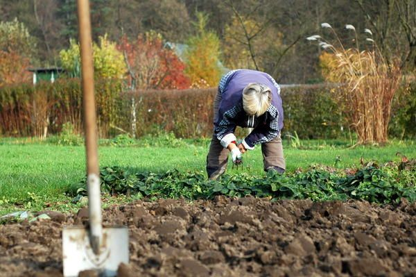 Осіння обробка грунту