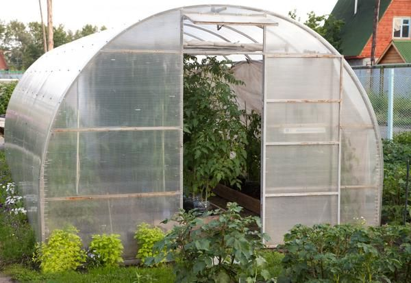 Особливості та переваги теплиць із стільникового полікарбонату