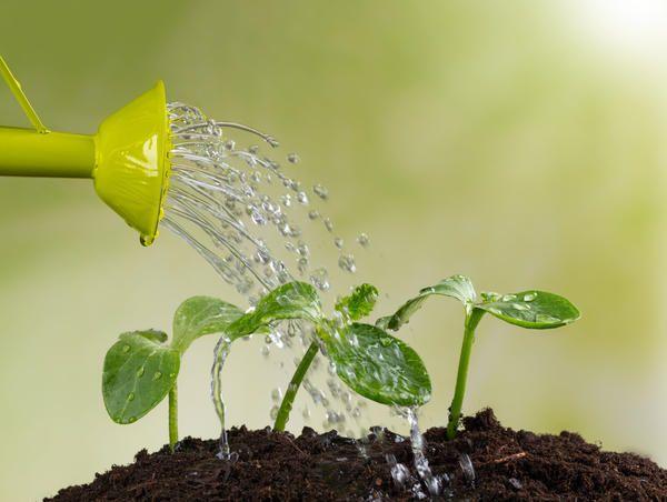 Особливості поливу рослин в домашньому городі