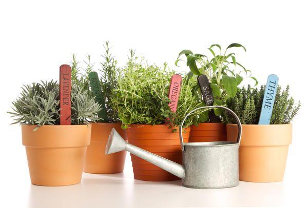 Більшості рослин шкідлива і посуха, і надлишок вологи