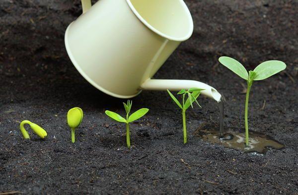 Інтенсивність поливу залежить від віку рослин