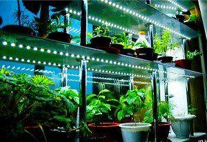 Освітлення розсади будинку - розкіш чи вимушена необхідність?