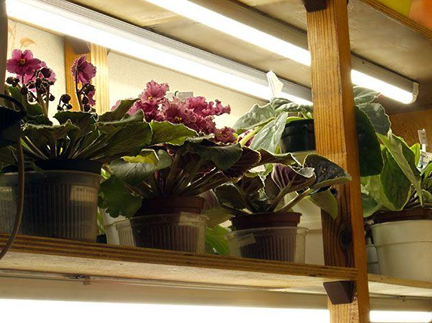 Додатково освітлення для рослин