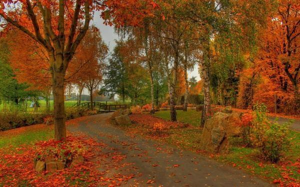 Газони під опалим листям