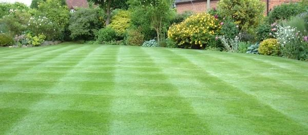 газон після стрижки