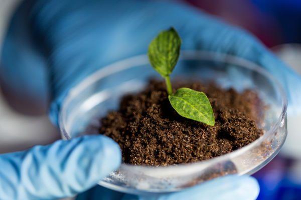 Чому компост шкідливий для рослин