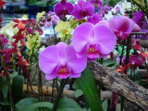 Чому орхідея в`яне