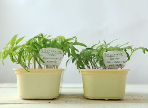 Грунт для розсади томатів, результат використання кокосового волокна
