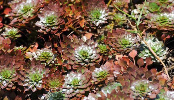 Грунтопокривні багаторічні рослини - гідна заміна газонах