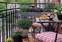 Підбираємо ампельні квіти для прикраси балкона
