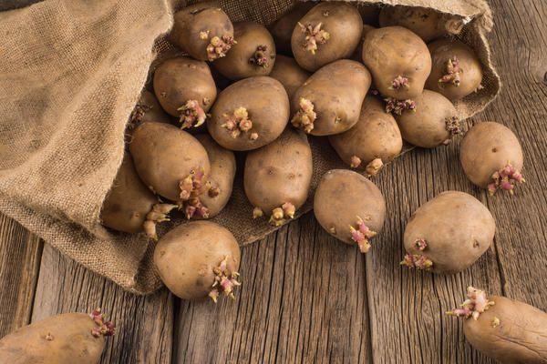 Поділіться досвідом - як ви готуєте до посадки картопля?