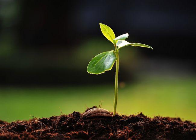Підготовка насіння до посадки