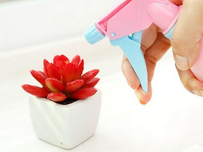 Якщо повітря недостатньо зволожений, на додаток до позакореневого підживлення проводять обприскування рослини