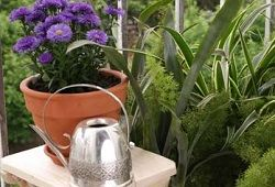 підживлення рослин дріжджами