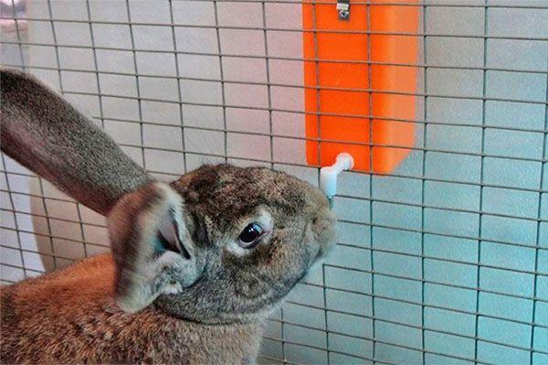Поїлки для кроликів з різних матеріалів робимо своїми руками