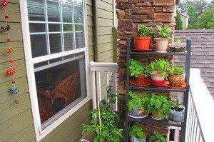 Як організувати город на балконі