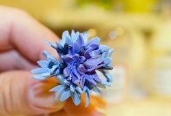 Полімерна глина: майстер-клас зі створення польових квітів
