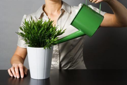 Полив кімнатних квітів потрібно організувати правильно