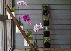 Полиці і стелажі для квітів в інтер`єрі
