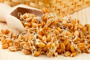 Пророщена пшениця: користь і шкода
