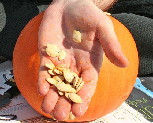 Гарбузове насіння корисні для всіх