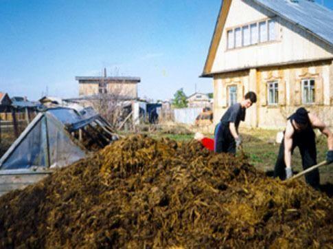 Користь від коров`ячого гною для кімнатних рослин
