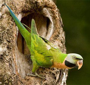 Папуга, небезпечний ворог рослин