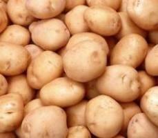 Як вибрати картопля на посадку?