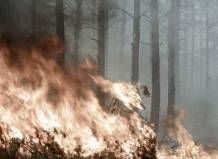 Погашені лісові пожежі, котрі знищували унікальні заповідники Грузії