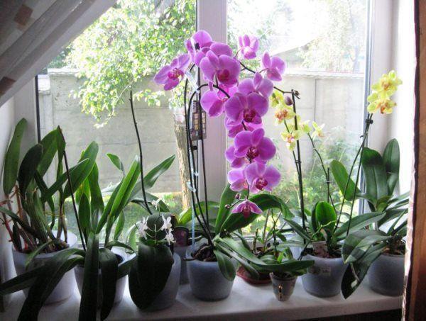 відповідне освітлення для орхідей